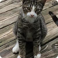Adopt A Pet :: Striker - Mobile, AL