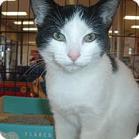 Adopt A Pet :: Ruby - Avon, OH