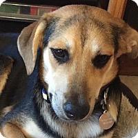 Adopt A Pet :: Gigi - Miami, FL