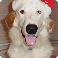Adopt A Pet :: Kyle *New* 1 1/2 years old - Stafford, TX