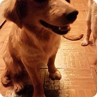 Adopt A Pet :: Marteen - Tucson, AZ