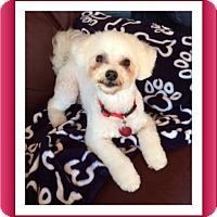 Adopt A Pet :: Adopted!!Joey - MO - Tulsa, OK