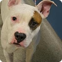Adopt A Pet :: Geezer Butler - Troy, MI