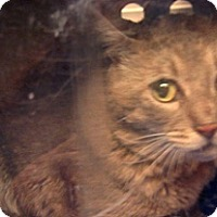 Adopt A Pet :: 299333 - Wildomar, CA
