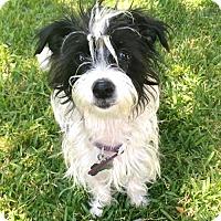 Adopt A Pet :: Grace - Los Angeles, CA