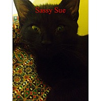 Adopt A Pet :: Sassy Sue - Warren, OH