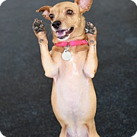 Adopt A Pet :: Rico - Nanuet, NY