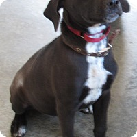 Labrador Retriever Mix Dog for adoption in Camden, Arkansas - Delta