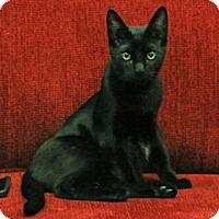 Adopt A Pet :: Pablo - Morgan Hill, CA