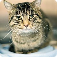 Adopt A Pet :: Meeko - Appleton, WI