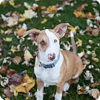 Adopt A Pet :: Lucky - Dayton, OH