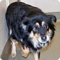 Adopt A Pet :: 324028 LF - Wildomar, CA