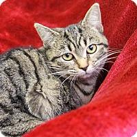 Adopt A Pet :: Appolonia - Greensboro, NC