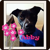 Adopt A Pet :: Abby - Friendswood, TX