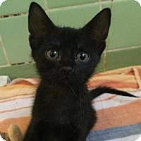 Adopt A Pet :: Yinnie Cooper - Austin, TX