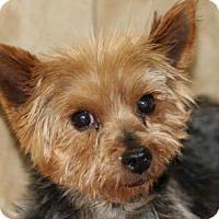 Adopt A Pet :: Sailor - Colorado Springs, CO