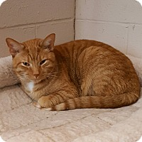 Adopt A Pet :: Simba - Henderson, KY