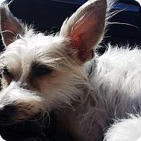 Adopt A Pet :: Spin - Monrovia, CA