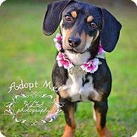 Adopt A Pet :: Malley - Fort Valley, GA