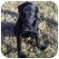 Photo 1 - Labrador Retriever Mix Dog for adoption in Whitehouse, Texas - Gracie