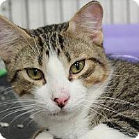 Adopt A Pet :: Gatsby - Santa Monica, CA