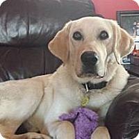 Adopt A Pet :: Flash - Homewood, AL