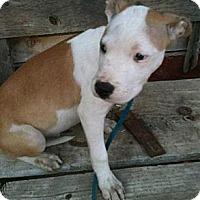 Adopt A Pet :: 5 boys - URGENT! - Seattle, WA