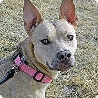 Adopt A Pet :: Sassy - Cheyenne, WY