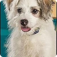 Adopt A Pet :: Milo - Owensboro, KY