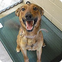 Adopt A Pet :: Douglas - Wickenburg, AZ