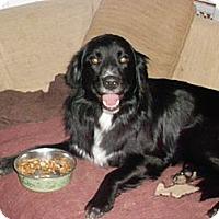 Adopt A Pet :: Bentley &Beckett - Raleigh, NC