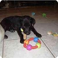 Adopt A Pet :: Inky - Scottsdale, AZ
