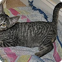 Adopt A Pet :: Ms. Runt (spayed) *VIDEO* - New Smyrna Beach, FL