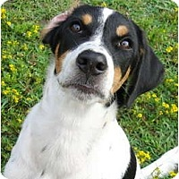 Adopt A Pet :: Dillon - Sweet and Playful Pup - Zebulon, NC