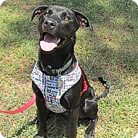 Adopt A Pet :: Ebony - Kingwood, TX