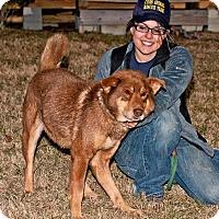Adopt A Pet :: Ashe - Cashiers, NC