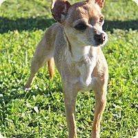 Adopt A Pet :: Canela - Winters, CA