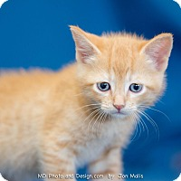 Adopt A Pet :: Sonny - Fountain Hills, AZ