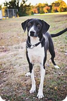 Border Collie Mix Dog for adoption in Fayetteville, Georgia - Surfer