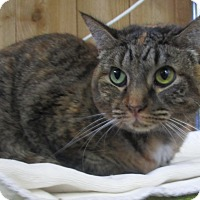 Adopt A Pet :: India (de clawed in front) - Witter, AR