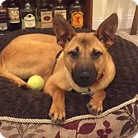 Adopt A Pet :: Randy (Has application) - Washington, DC