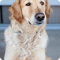 Adopt A Pet :: Canari - San Diego, CA