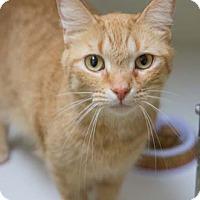 Adopt A Pet :: Laredo - Merrifield, VA
