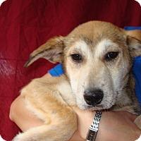 Adopt A Pet :: Dozer - Oviedo, FL