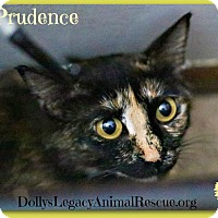 Adopt A Pet :: PRUDENCE - Lincoln, NE