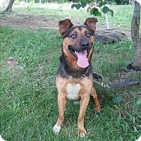 Adopt A Pet :: Barney - Louisville, KY