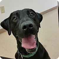 Adopt A Pet :: Flint - Chambersburg, PA