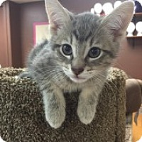 Adopt A Pet :: Smitty - McHenry, IL