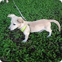 Adopt A Pet :: Sprout - Austin, TX