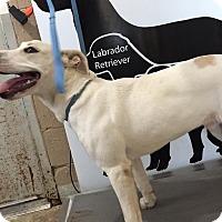 Adopt A Pet :: Cornhusker - Lewisburg, TN
